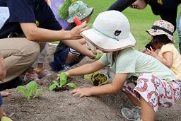 20190905_元気の木保育室秋の苗植え (24)