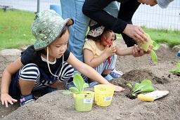 20190905_元気の木保育室秋の苗植え (25)