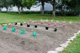 20190905_元気の木保育室秋の苗植え (18)
