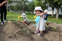 20190905_元気の木保育室秋の苗植え (54)
