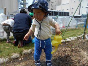 菜園活動 (7)