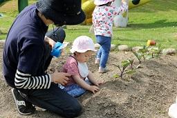 夏野菜の苗植え (28)