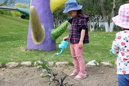 夏野菜の苗植え (36)