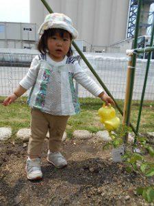 菜園活動 (8)