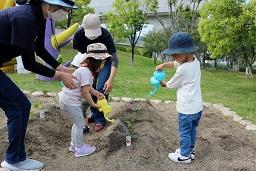 夏野菜の苗植え (40)