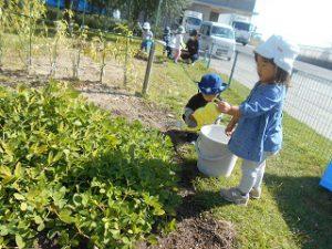 菜園活動 (2)