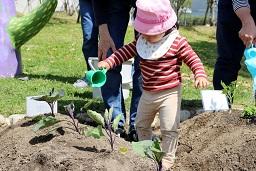20210415_元気の木保育室 夏野菜の苗植え (43)
