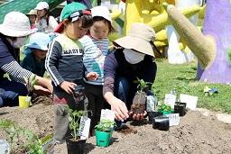 20210415_元気の木保育室 夏野菜の苗植え (20)