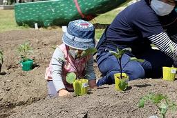 20210415_元気の木保育室 夏野菜の苗植え (19)