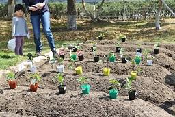 20210415_元気の木保育室 夏野菜の苗植え (2)