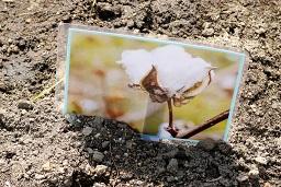 20210415_元気の木保育室 夏野菜の苗植え (56)