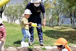20210415_元気の木保育室 夏野菜の苗植え (45)