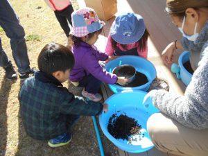 カブトムシの土入れ替え (2)