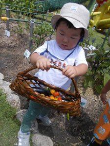 菜園活動 (55)