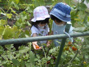 菜園活動 (102)
