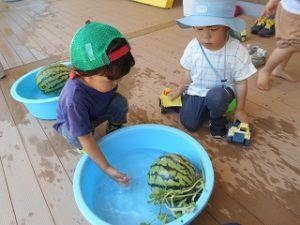 スイカの収穫 1 (5)